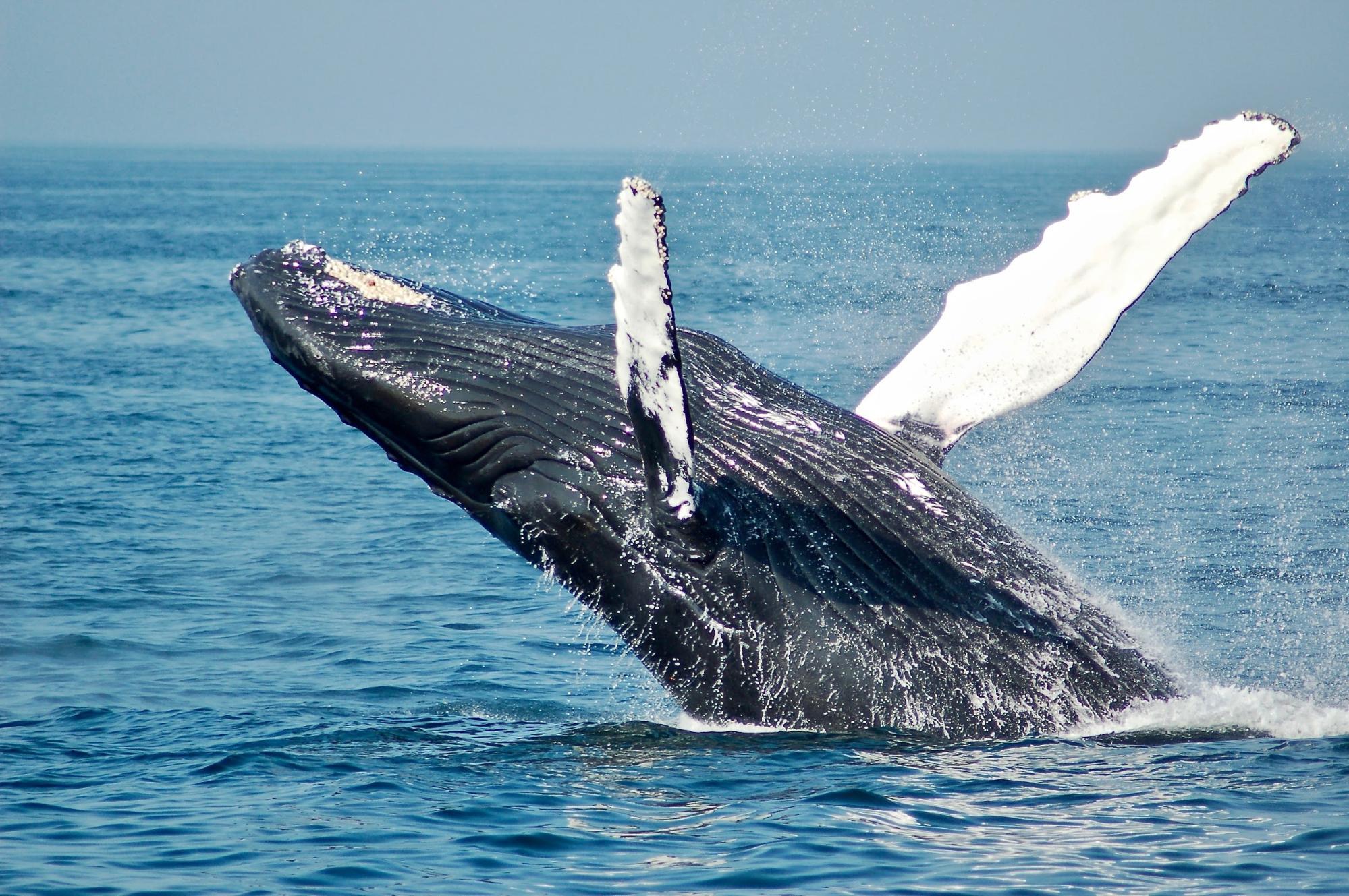 échouer comme une baleine